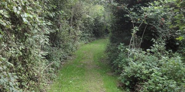 Waldandacht-Wanderweg nach Reidling