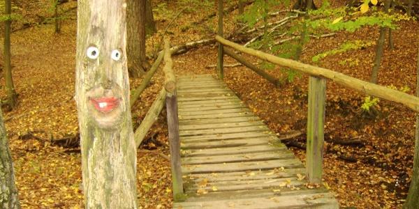 Lustige Baumgesichter lachen uns in der Steckeschlääferklamm an.