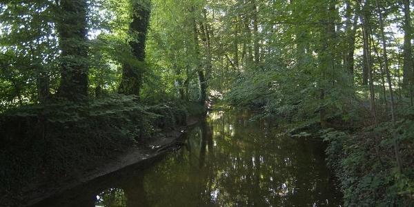 Blick von der Hesselbrücke im Versmolder Naturschutzgebiet