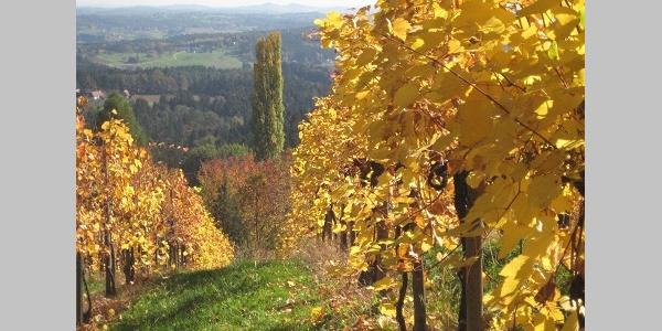 Blick in Richtung Oststeiermark im Herbst