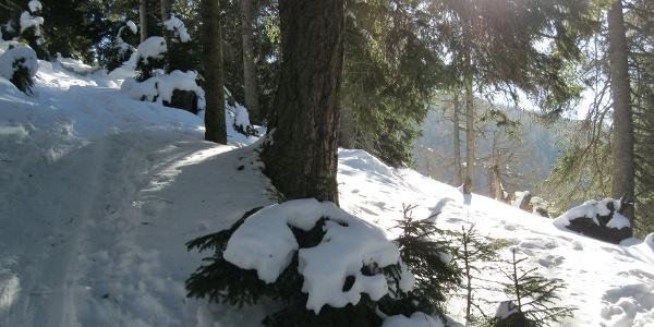 Am Sommerweg durch den Wald