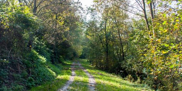 In diesen Feldweg einbiegen, linksseitig vom Baumbach