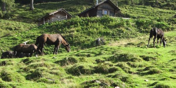 Pferdeweide und Weg unterhalb der Wieser Alm