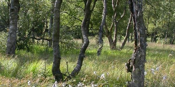 Moorwald im oberen Edertal