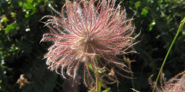 Blumenpracht im August
