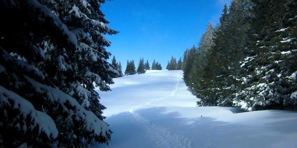 Abstieg zur Alp-Alpe.