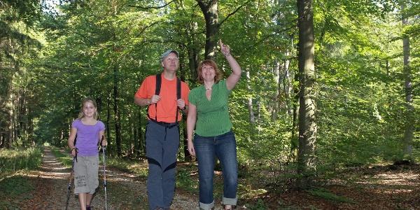 Wandern im Bienwald