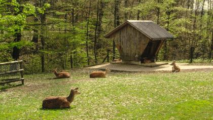 Parc animalier Bruderhaus