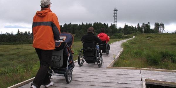 Auf dem Bohlenweg geht es durch das Hochmoor