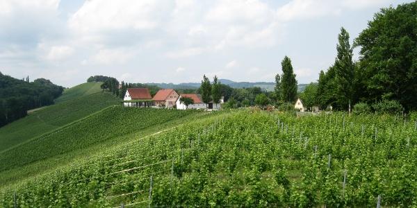 In den Weingärten auf dem Sernauberg