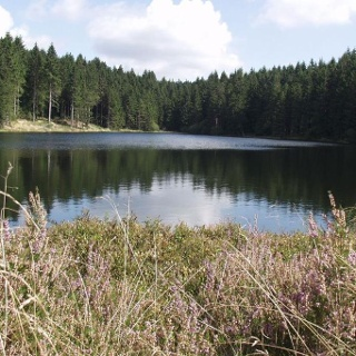 Neuer Grumbacher Teich