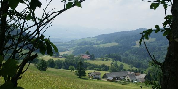 Elsbeerweg zur Gföhlberghütte