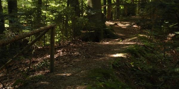 Panoramaweg Steg im Wald