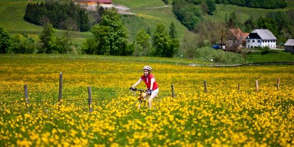 Unterwegs im steirischen Frühling