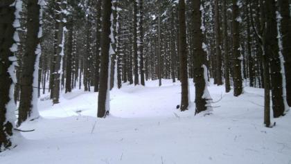Winterwald am Preiner Gscheid