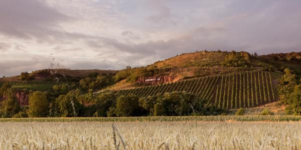 """Auf der Vitaltour """"Wald, Wein, Horizonte"""""""