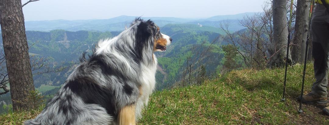 Merlin und im Hintergrund die Ara-Burg