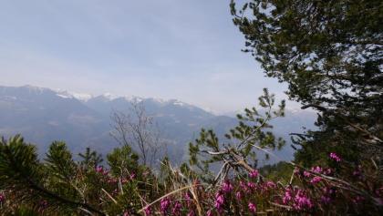 Aussicht vom Monte Alpini