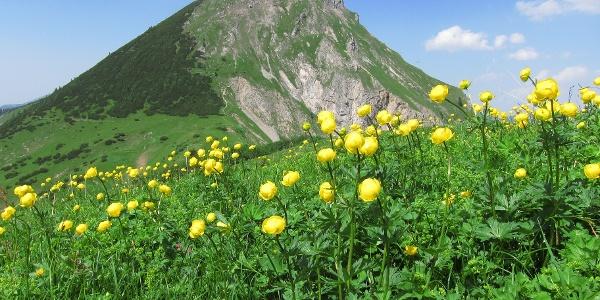 Trollblumen am Mahnkopf