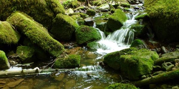 Kleiner Wasserfall in der Monbachschlucht