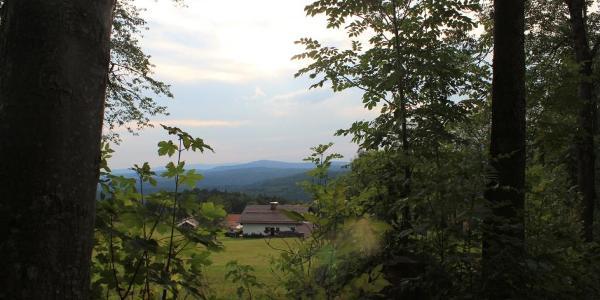 Steinfelsenhänge Waldhäuser Bayerischer Wald