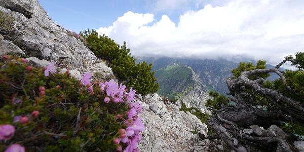 Blütenpracht am Monte Cornetto