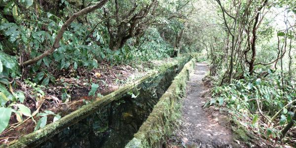 Der Weg veläuft teilweise an einer Levada