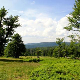 Schachten Bayerischer Wald