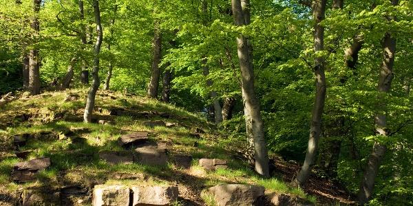 Buchen-Eichen-Wald - Klippensteig