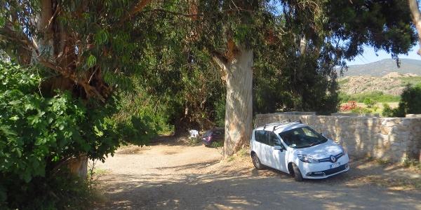Parkplatz unter großen Eukalytusbäumen beim....