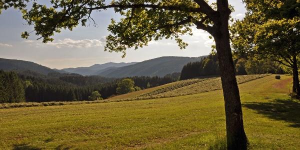 Blick von der Hütte am I-Weg