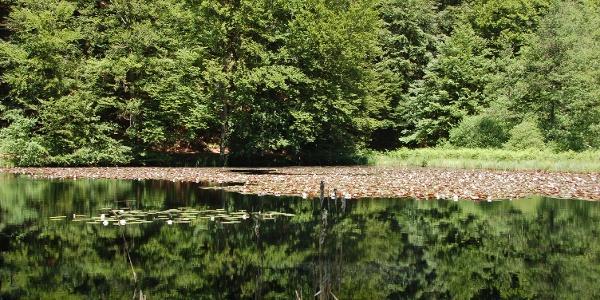 Naturschutzgbiet Moosbach