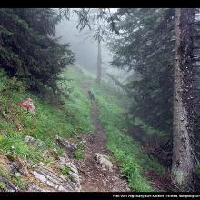 Pfad vom Vogelsang zum Kleinen Traithen, Mangfallgebirge, Bayern, Deutschland