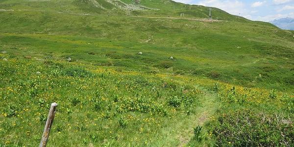 Weg ins Grasjoch von der Zamangspitze