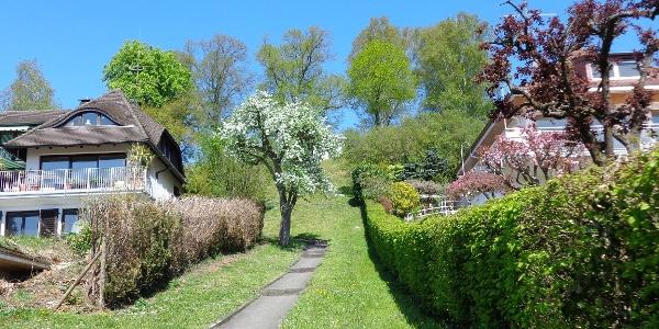 Weg zum Höhrenberg