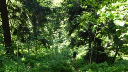 Waldpfad auf den Burgstall