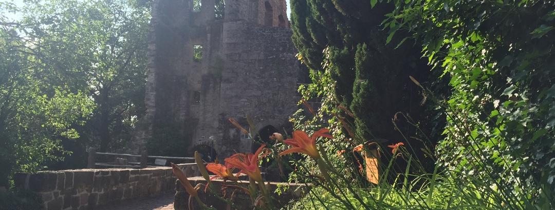 Pflanzenpracht an der Burgruine Zavelstein