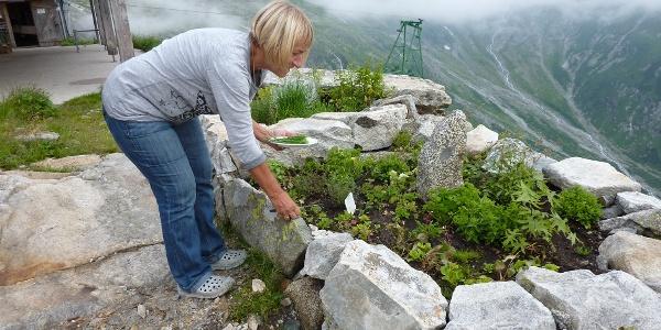 Hüttenwirtin Monika Gamper in ihrem Kräutergärtle - La padrona Monika Gamper nel suo giardino d'erbe