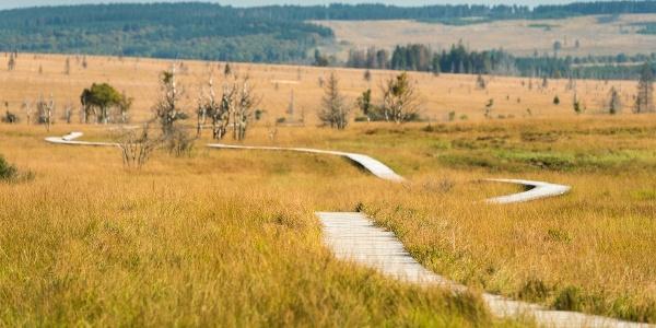 Naturschutzreservat Hohes Venn