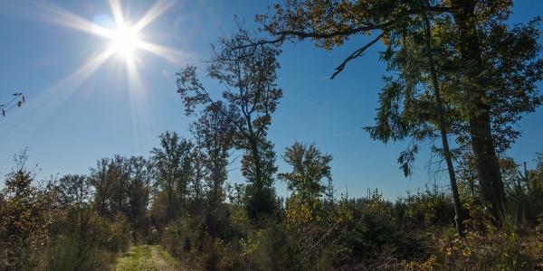 Höhenweg im lichten Wald
