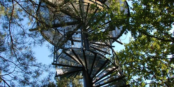 Baumwipfelpfad beim Biosphärenhaus