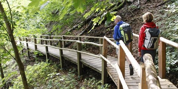 Wanderung durch die Buchenwälder des Nationalparkes Jasmund