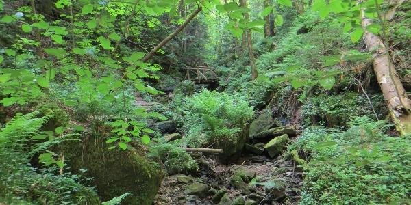 Wunderwerk der Natur: die Wolfsschlucht