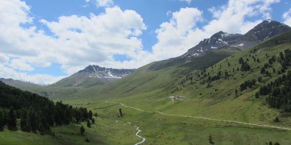 Tamangur Dadora, Blick zur Alp Astras