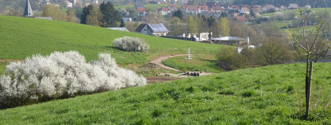 Blick auf Nanzdietschweiler