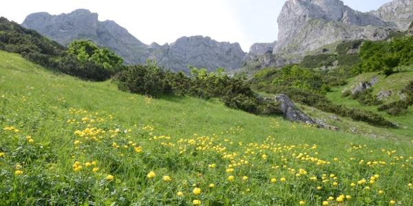Trollblumen tupfen die Wiesen im unteren Teil des Abstiegs.