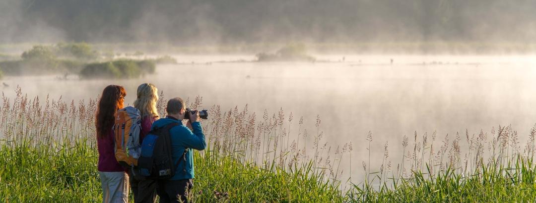 Morgennebel am Jungferweiher Ulmen