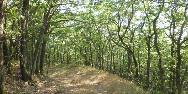 Pfad durch den Eichenwald am Karlskopf