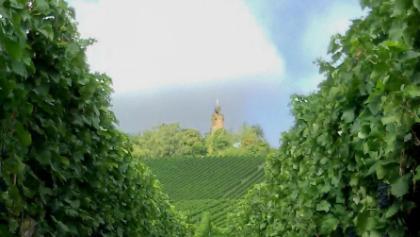 Der Wartturm am Heuchelberg wartet auf die Weinlese