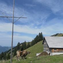 Alpe Lingenauere